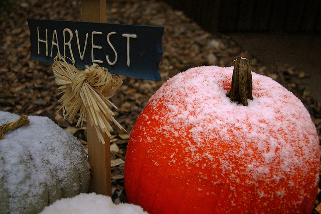 Frost-on-Pumpkin