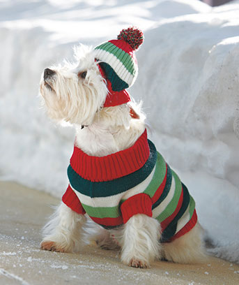 Pet-sweater-set