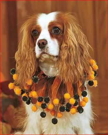 halloween-dog-collar
