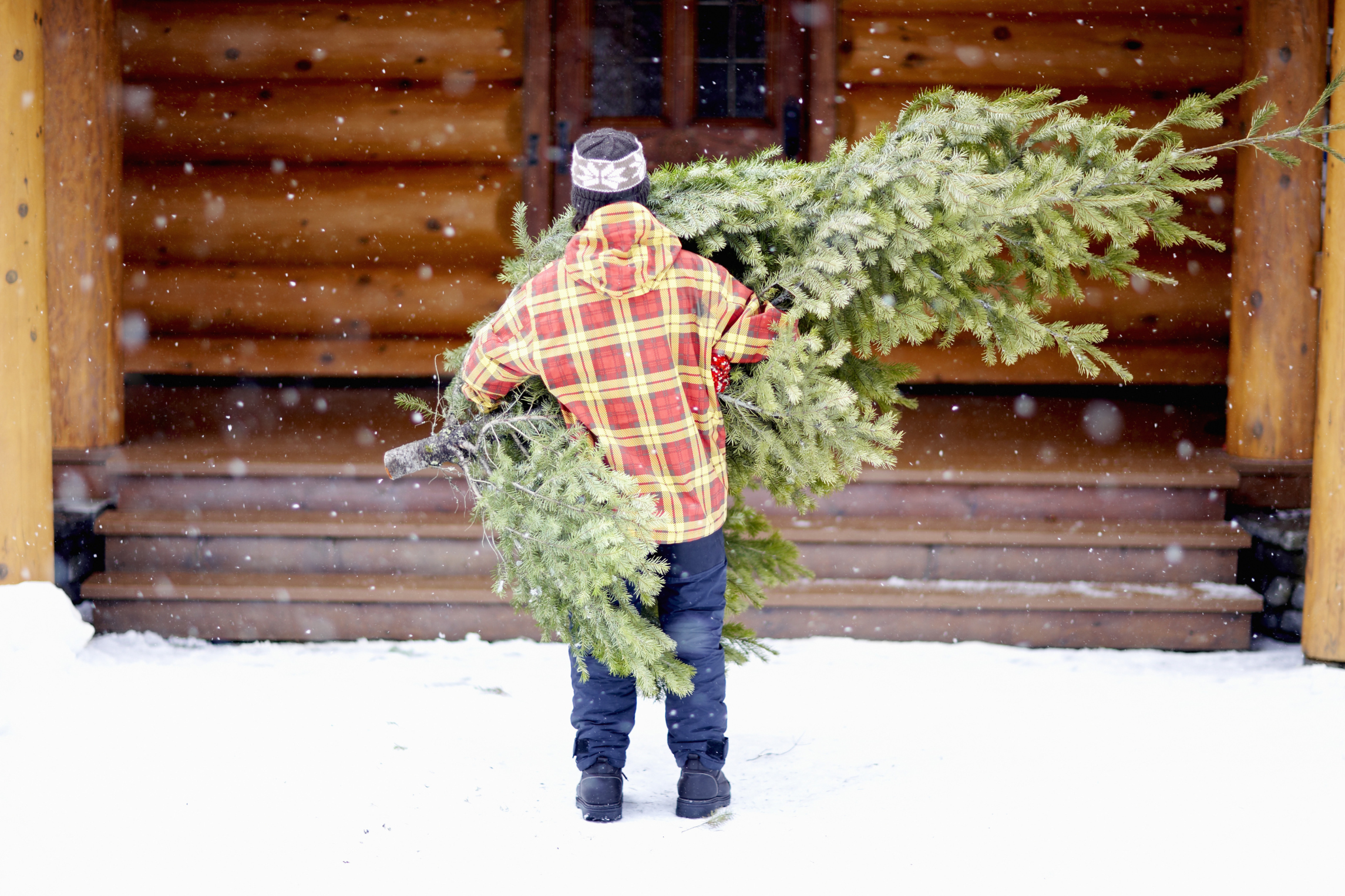 4 Things You Can Do With Your Christmas Tree