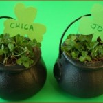 Pot-of-Shamrocks