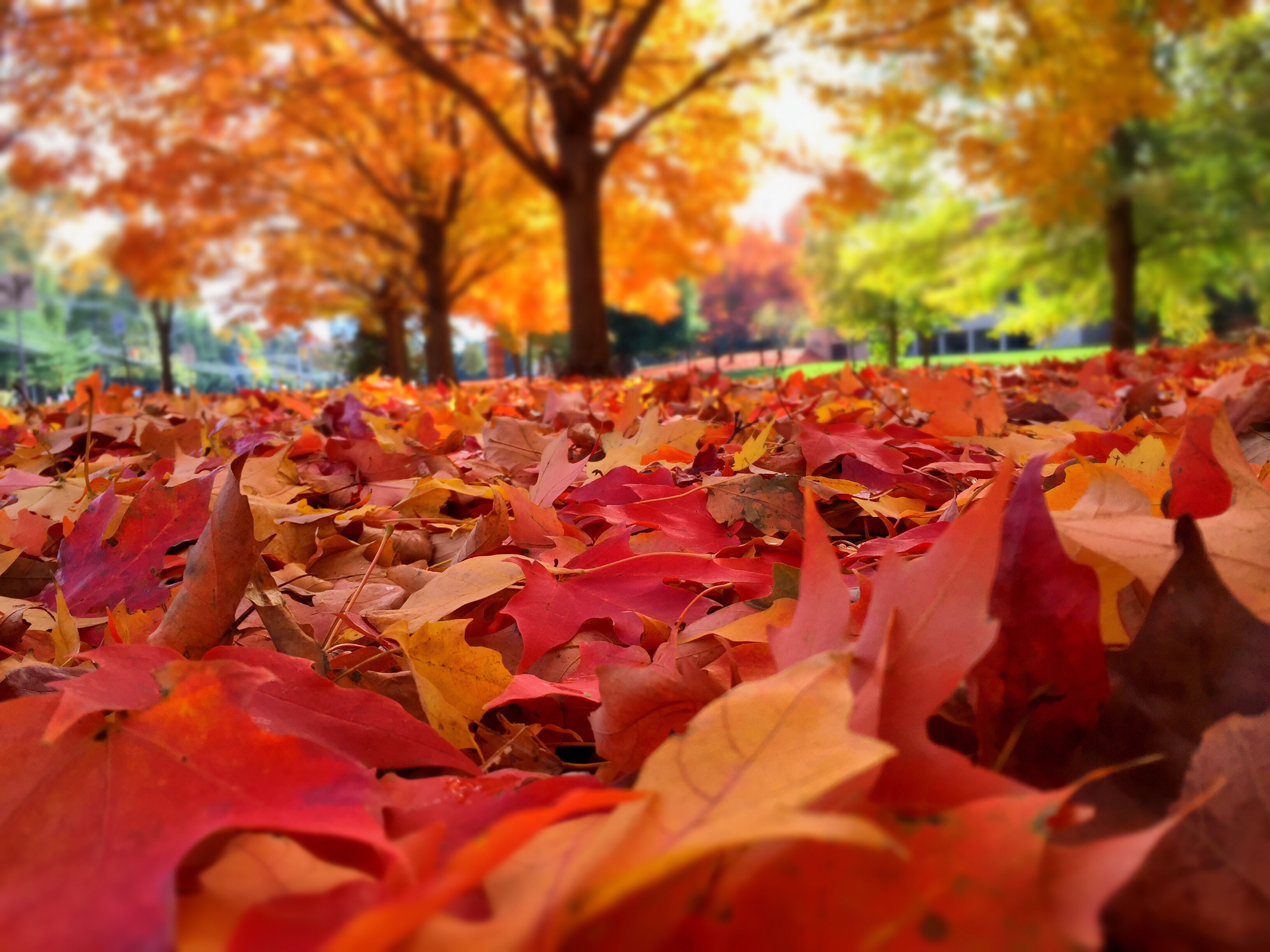 autumn-leaves-on-ground