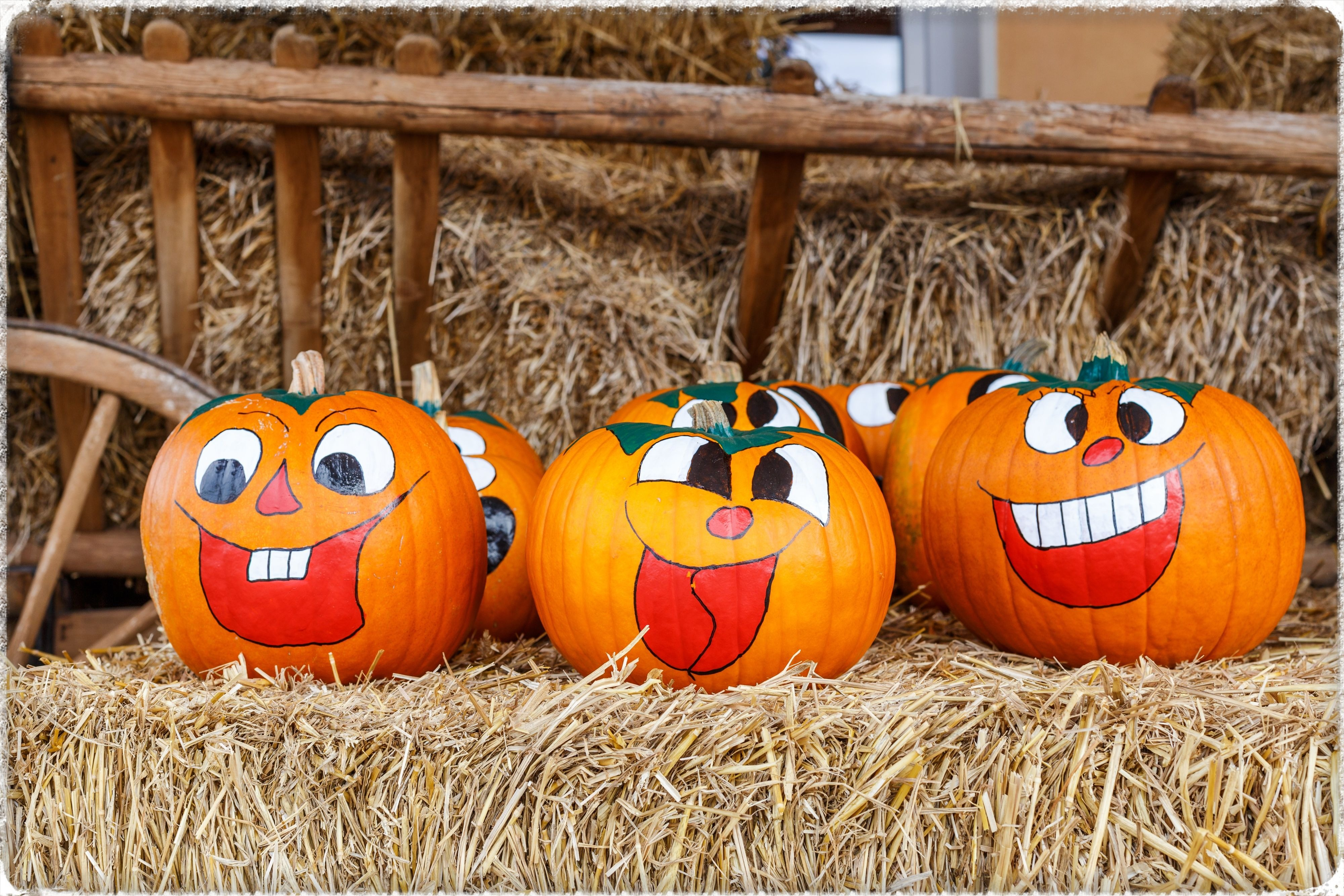 7 No Carve Pumpkin Decorating Ideas | The Lakeside Collection