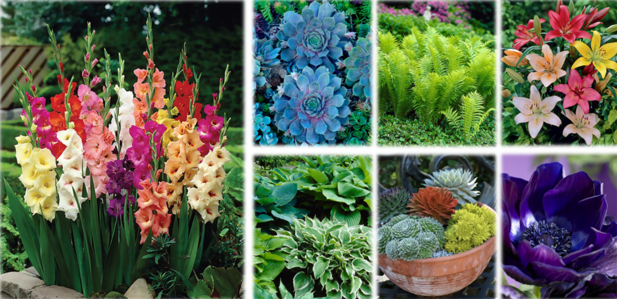 The Lakeside Collection's Guide To Live Plants & Flowers
