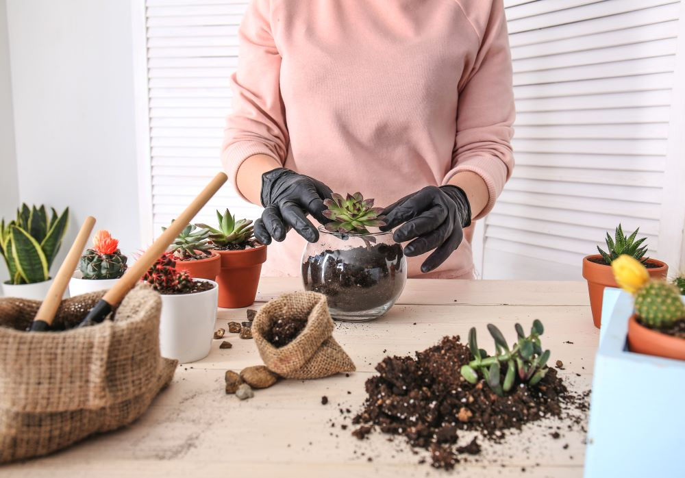 Taking Care Of Succulents - Indoor Succulents