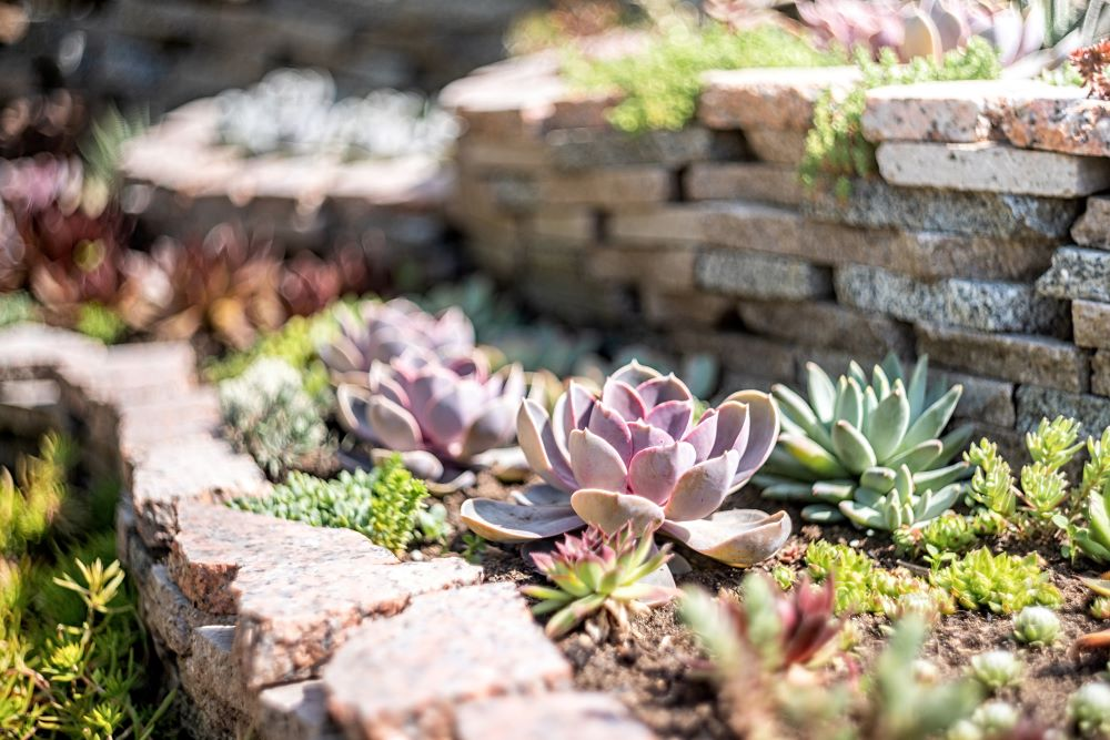 Taking Care Of Succulents - Outdoor Succulents