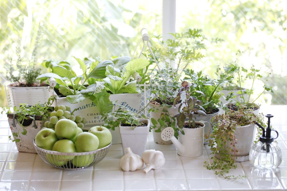 Grow Herbs Indoors - Containers