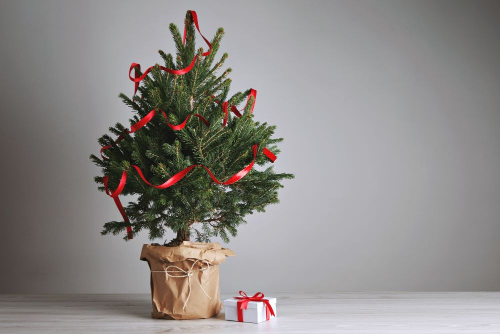 Christmas Decorating Ideas For Small Spaces - Small Christmas Tree In Pot