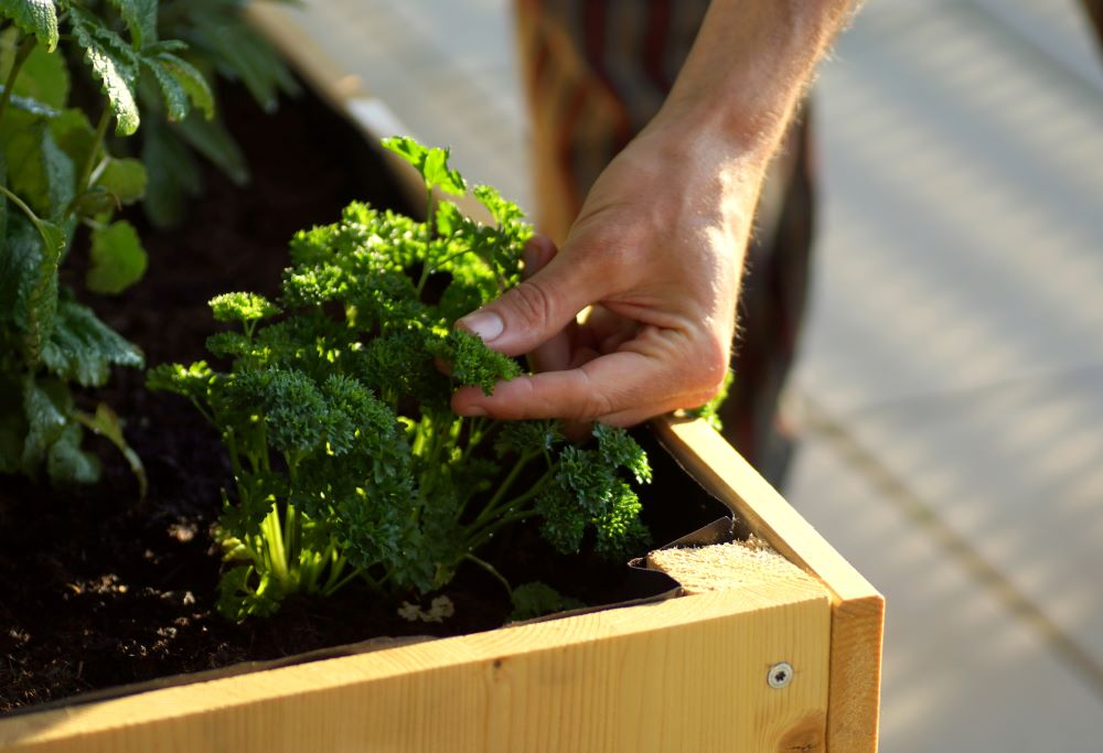 Raised Bed Gardening Tips - Planting Herbs And Vegetables