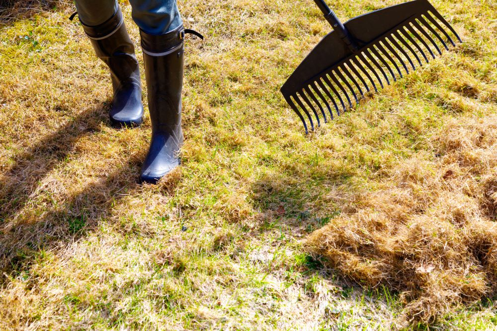 Clean Your Lawn For Spring