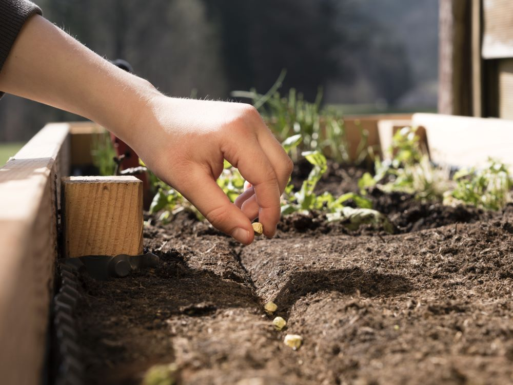 Planting Seeds In Rows