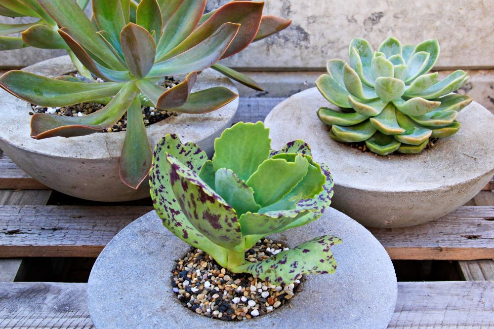 DIY Cement Flower Planter