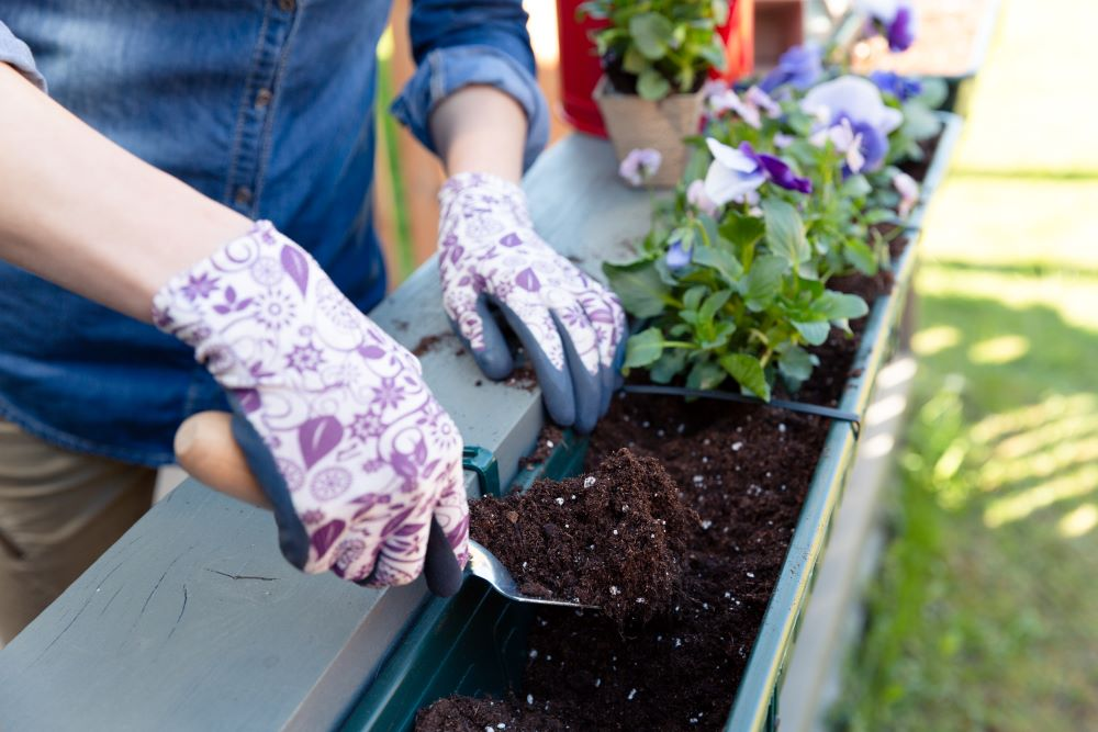 How To Plant A Garden On A Budget - Container Gardening