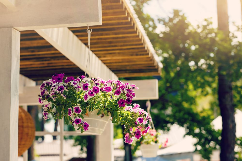 Other Ways To Care For Hanging Plants