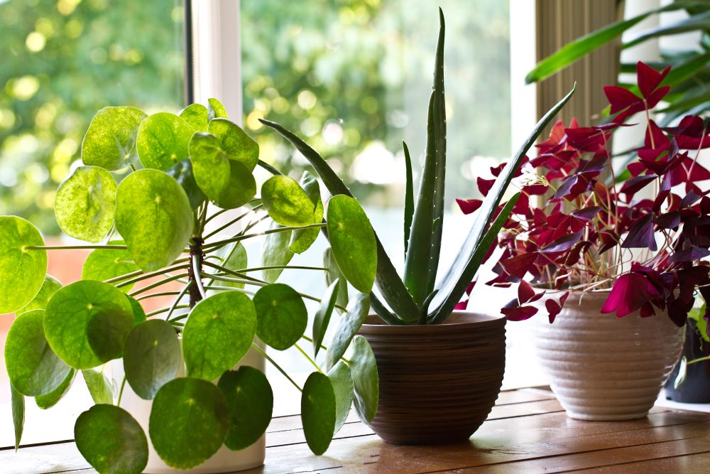 Houseplant Tips - Give Them Enough Sunlight