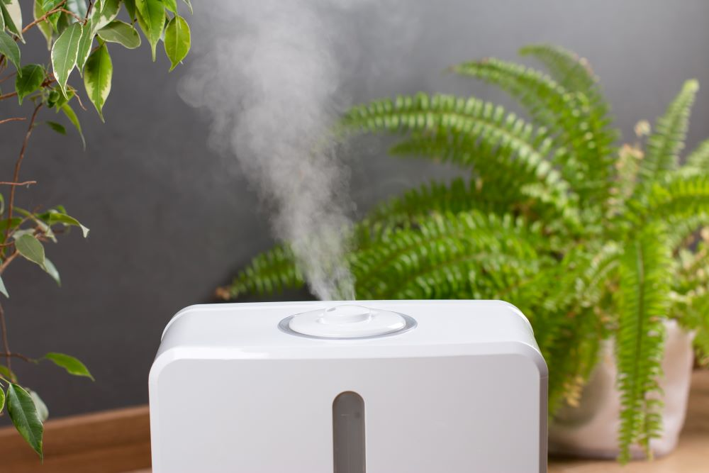 Houseplant Tips - use A Humidifier