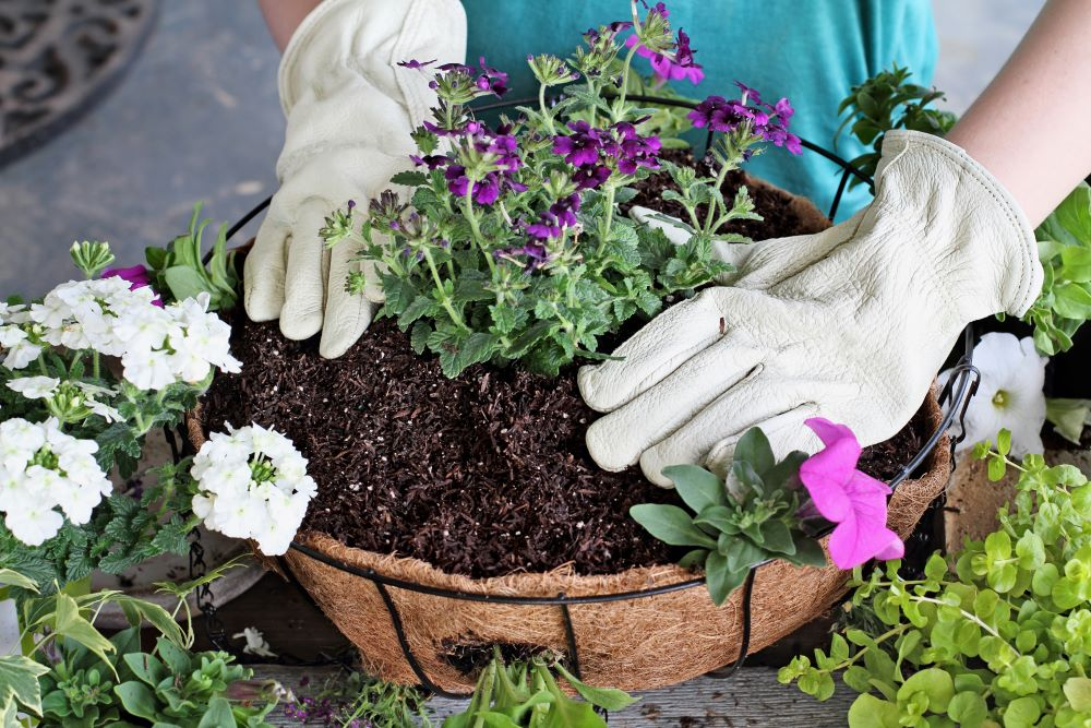 How To Care For Hanging Plants - Use Fertilizer