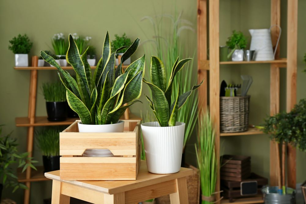 Houseplant Tips - Keep Them Away From Drafts