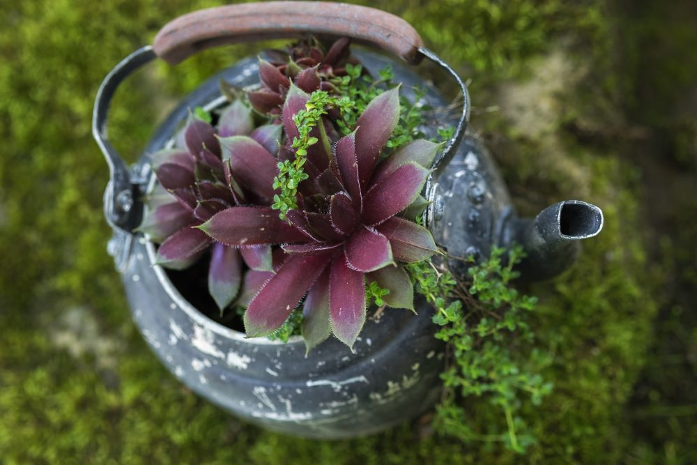 DIY Teapot Flower Planter