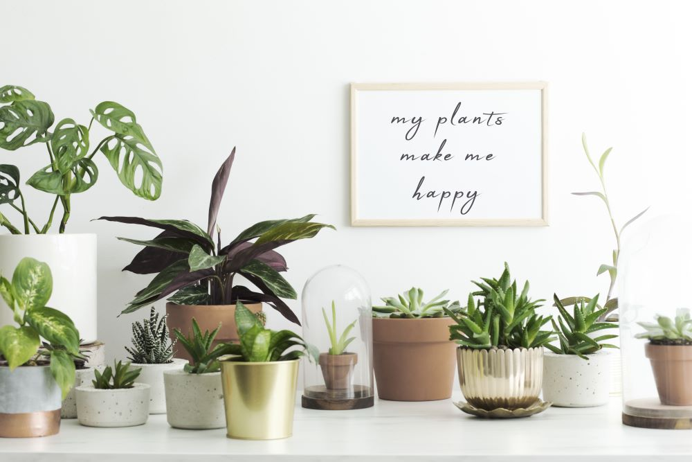 Use The Right Pots For Houseplants