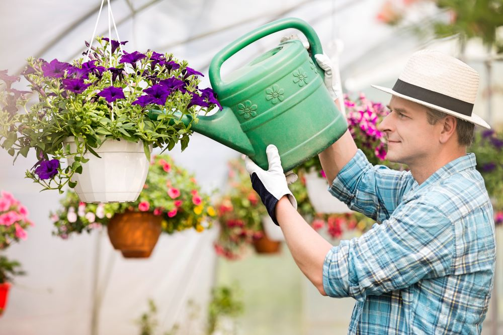 How To Care For Hanging Plants - Water Plants Often