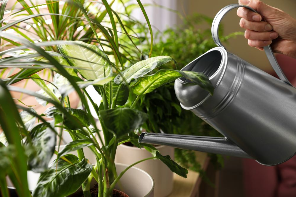Houseplant Tips - Water Frequently